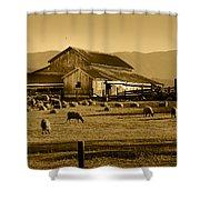 Sheep And Barn Shower Curtain