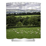 Sheep And More Sheep Shower Curtain