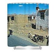 Sheep And Shepherd Along The Road To Shigatse-tibet Shower Curtain