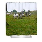 Sheep And Stones At Avebury Shower Curtain