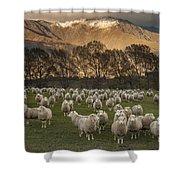 Sheep Flock At Dawn Arrowtown Otago New Shower Curtain