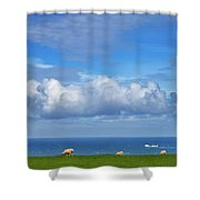 Sheep Grazing On The North Yorkshire Shower Curtain