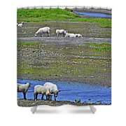 Sheep In Branch-nl Shower Curtain