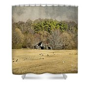 Sheep In The South Shower Curtain by Jai Johnson