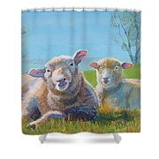 Sheep Lying Down Shower Curtain
