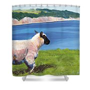 Sheep Shower Curtain