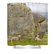 Sheep On A Mountain Pasture Between Granite Rocks Shower Curtain