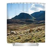 Sheep On Grassland Highlands Scotland Uk Shower Curtain