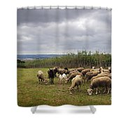 Sheep Pasturing Shower Curtain