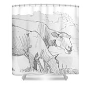 Sheep Pencil Drawing  Shower Curtain