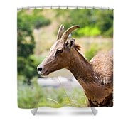 Sheep Portrait Shower Curtain