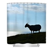 Sheep Silhouetted In Scotland Shower Curtain