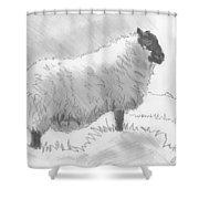 Sheep Sketch Shower Curtain