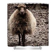 Sheep Stare Shower Curtain