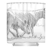 Sheep Walking Shower Curtain