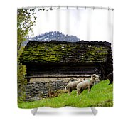 Sheeps And Rustic House Shower Curtain