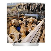 Sheeps Enclosure Shower Curtain
