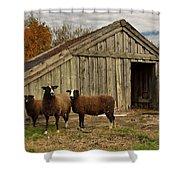 Sheeps  Shower Curtain