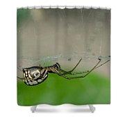 Sheet Web Weaver Spider Shower Curtain