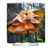 Shelf Fungus In Carl E. Wynn Nature Center In Homer-ak   Shower Curtain
