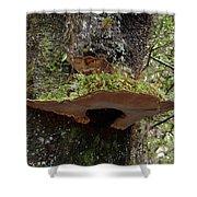 Shelf Mushroom With Moss Shower Curtain