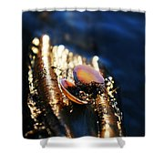 Shell By The River Shower Curtain