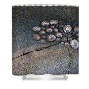 Shell Games Shower Curtain