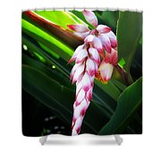 Shell Ginger 1 Shower Curtain