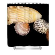 Shell Grouping Shower Curtain