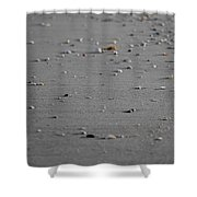 Shell Line Shower Curtain