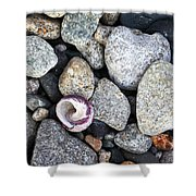Shell On The Shore 1 Shower Curtain