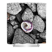 Shell On The Shore 2 Shower Curtain