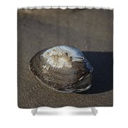 Shell Or Someone's Dinner Shower Curtain
