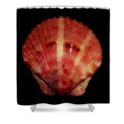 Shell Solo Vii Shower Curtain