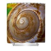 Shell Spiral Shower Curtain