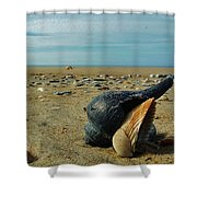 Shells A Plenty Hatteras Point 5 12/5 Shower Curtain