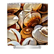 Shells Galore Shower Curtain