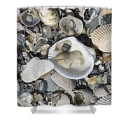 Shells In Shells 1 Shower Curtain
