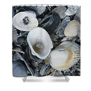 Shells In Shells 2 Shower Curtain