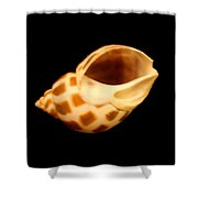 Shells Of The Gulf Coast 8 Shower Curtain