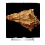 Shells Of The Gulf Coast 9 Shower Curtain