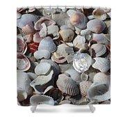 Shells On Treasure Island Shower Curtain by Carol Groenen
