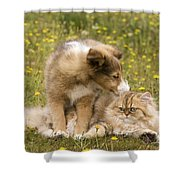 Sheltie Puppy And Persian Cat Shower Curtain