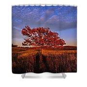 Shenandoah Tree Shower Curtain