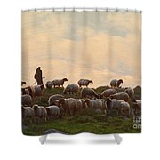 Shepherd With Sheep Standard Size Shower Curtain