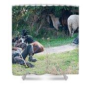 Shepherd's Rest Shower Curtain