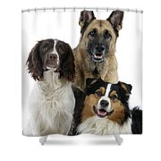Shepherds With English Springer Spaniel Shower Curtain