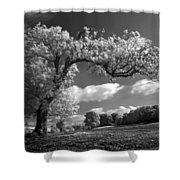 Shepton Tree Shower Curtain
