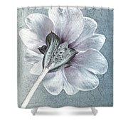 Sheradised Primula Shower Curtain by John Edwards