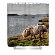 Shetland Pony At Shore  Shetland Shower Curtain